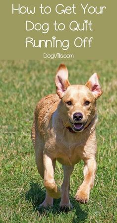 New Dog Training Ideas - See Dog Care and Training Ideas. #dog #dogtrainingideas