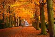 Why fall colors are different in the U.S. and Europe.