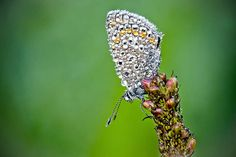 Stunning Macro Photographs of Insects Glowing in the Morning Dew