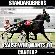 Standardbred Harness Racing Horses Rule The Home Stretch Drive