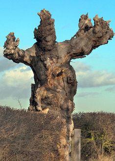 Newsbeast.gr   ΠΕΡΙΒΑΛΛΟΝ : Δεν είναι όλα τα δέντρα όμορφα