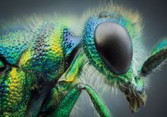 Premier Insect photographer John Hallmén shares his secrets for macro bug photography — Popular Photography - guide and tips for macro photography - Macro Photography Tips, Micro Photography, Insect Photography, Popular Photography, Photography Tips For Beginners, Abstract Photography, Artistic Photography, Animal Photography, Photography Lessons