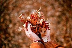 осень, книги, падение, хэллоуин, листья, октябрь, Tumblr