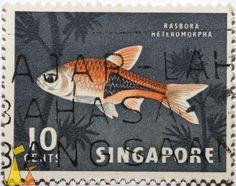 Harlequin rasbora, Singapore, stamp, fish, Harlequin rasbora, Rasbora heteromorpha, 10 cents, Trigonostigma heteromorpha
