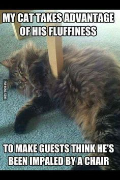 Only a cat will do that . - 9GAG