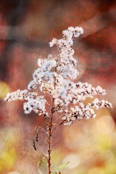 """""""Fuzz"""" - Part of the Textures Series from 7:10 Studio Photography."""
