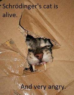 -Schrödinger's cat