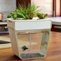 AquaFarm - Aquaponic Garden and Self-Cleaning Aquarium (but how do feed da fish?)