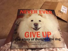 Never ever give up , a book about Bumper the chow. PALNY pet adoption league of NY Chow Chow Rescue. http://www.amazon.com/gp/aw/d/1512252050/ref=mp_s_a_1_2?qid=1439083331&sr=8-2&pi=AC_SY200_QL40&keywords=never+ever+give+up&dpPl=1&dpID=516HyDePb%2BL&ref=plSrch