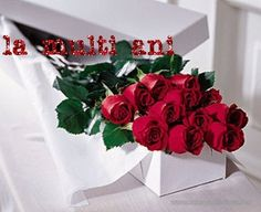 King West Flowers: a popular Toronto florist. Visit our store or order flowers online. Flower Delivery in Toronto & the GTA, incl. Blue Roses Wallpaper, Dozen Roses, Happy Birthday Flower, Love Rose, Flower Delivery, Beautiful Roses, My Flower, Red Roses, Nighty Night