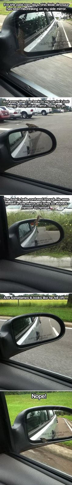 hitchiking lizard lives in your mirror