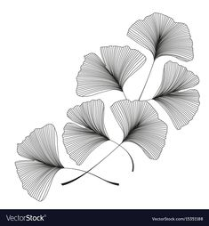 Ginkgo biloba leaves vector image on VectorStock Doodle Art Drawing, Leaf Drawing, Zentangle Drawings, Pencil Art Drawings, Zentangle Patterns, Copic Drawings, Doodle Patterns, Mandala Art, Mandala Design