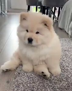 Watch funny and cute dogs and puppies as they are the most lovable pets in the world. Cute Funny Animals, Cute Baby Animals, Animals And Pets, Fluffy Dogs, Fluffy Animals, Cute Dogs And Puppies, Doggies, Chubby Puppies, Malamute Puppies
