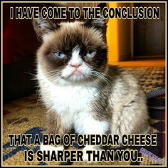Another Grumpy Cat meme by the other Grumpy Kat 2017 Not sharper than cheddar cheese