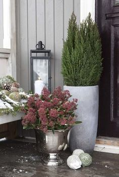 Her får du tips til hvordan du bør stelle vintergrønne busker. House Front Door, Front Door Decor, Outdoor Christmas Decorations, Outdoor Plants, Flower Arrangements, Diy Home Decor, Outdoor Living, Flora, Planter Pots