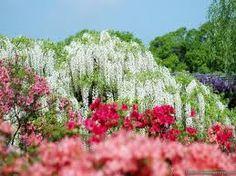 amazing flowers - Google zoeken