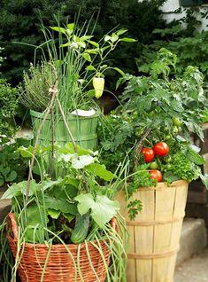 Rabiscos e Jardinagens: Horta em vasos!