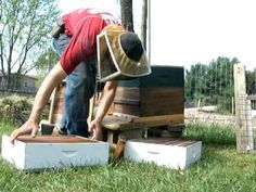 Adding honey supers to bee hives.