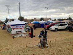 Tempe Sports Complex Four out of Five Paws   My last experience at this location was the Good Dog Agility 2015 USDAA Southwestern Regional***.  The footing is very level, but the grass (like m...