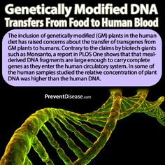 Genetically Modified DNA Transfers From Food to Human Blood.  If Monsanto or Syngenta had done any human studies with GMO foods, they would have discovered this  !!   Now they have plausible denyability and are scott free...