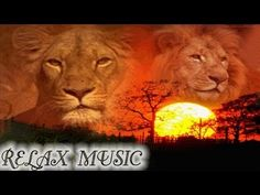 AFRICAN SAVANNAH, AFRICAN MUSIC RELAX, RELAXING MUSIC, MUSICA RELAX, MUSICA RELAJANTE SD - YouTube
