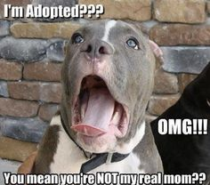 I'm Adopted!? magnet - Dogs Make Me Happy