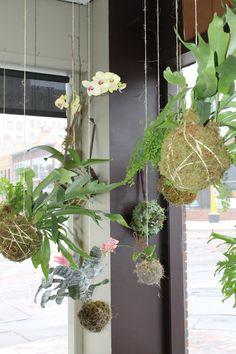 string garden! Love this