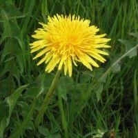 Remedii naturale pentru arderea grăsimilor Natural Remedies, Beauty, Plant, Natural Home Remedies, Beauty Illustration, Natural Medicine