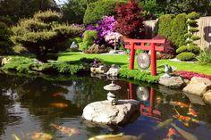 Japanse tuin met koivijver. In de koivijver zwemmen o.a. showa's en kohaku's. Verder is de tuin prachtig opgezet in Japanse style.