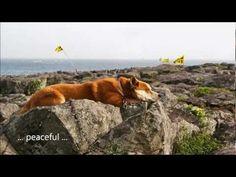Save Jeju, Save Peace