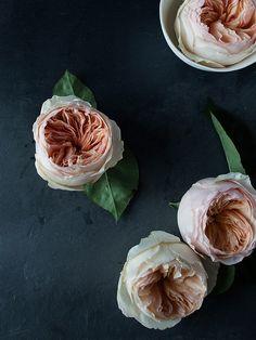periwinkleliving:    (via lingered upon: Rose Studies)