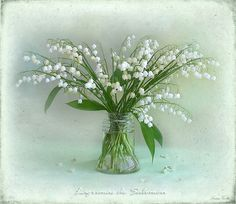 Lilly of the valley. These have always been one of my favorite flowers. They grew wild where I lived as a child.