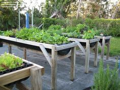 wheelchair gardening raised beds - Google Search