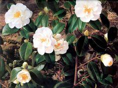 An Artists Garden : Botanical Garden Painting by Raymond Booth Desktop Wallpaper Watercolor Flowers, Watercolor Art, Decoupage, Garden Painting, Painting Art, Plant Wallpaper, Canvas Art Prints, Botanical Gardens, Online Art