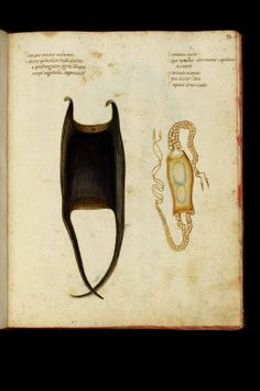 Ulisse Aldrovandi - Theatrum naturale - Late 16th c. - Shark eggs