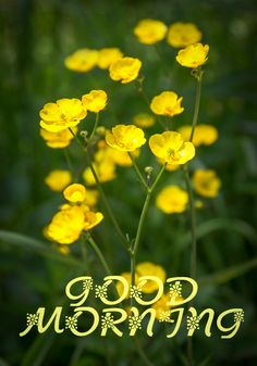 Good Morning Images, Good Morning Quotes, Morning Noon And Night, Morning Greeting, Mornings, Tuesday, Yellow, Nice, Flowers
