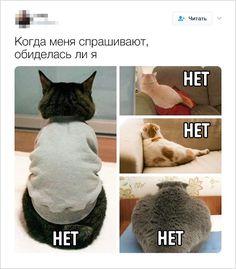То чувство, когда смотришь на шутки и удивляешься, что ты не один такой на свете, — оно просто бесценно. AdMe.ru сделал свежую подборку юмора из серии «О да, как же это знакомо», и мы подписываемся под каждым твитом. Отмечайте в комментариях, сколько ситуаций было у вас, добавляйте новые, посмеемся вместе. А бонус в конце — это проверка: если у вас такого не было, вы вообще с нашей планеты?