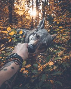 A photographer has created an adorable photo series which shows him petting his dog in beautiful settings. Honza Řeháček, and his dog Sitka have been travelling around the Czech. Cute Dogs Breeds, Dog Breeds, Animals And Pets, Cute Animals, Czechoslovakian Wolfdog, Dog Information, Hiking Dogs, Photos Voyages, Boy Dog
