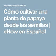 Cómo cultivar una planta de papaya desde las semillas | eHow en Español