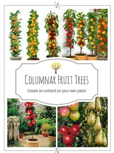 Do You Think That Because You Live In A City Or Urban Area You Cannot  Enjoy. Potted TreesPatio Fruit ...
