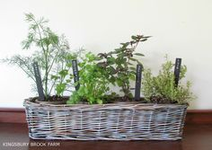 Who gets frustrated every time they spend money on herbs at the grocery store and see them wilt a week later? One fond memory I have of my grand-maman Annette's apartment in Québec city was her indoor herb garden. My sister and I used to pick at her ciboulette (chives) when she was cooking.Herbs really …