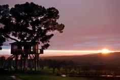 A Tree House To Die For In Tuscany, Italy