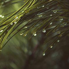 """ถูกใจ 26 คน, ความคิดเห็น 1 รายการ - OuiClementine (@ouiclementine) บน Instagram: """"Estos días de tanto frío lo único que me apetece es estar en casa, calentita y con un té. Curando…"""""""
