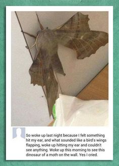 Moths are just colorless butterflies,no big deal yo.......unless you find this lil....I mean big shit then yes it is a BIG deal