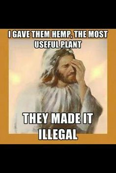 God made hemp and cannabis. I trust God! Weed Quotes, Weed Memes, Weed Humor, Funny Quotes, Stoner Quotes, Funny Memes, Stoner Humor, Marijuana Facts, Endocannabinoid System