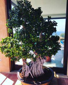 Bonsai #arbre #bonsai #ikebana #zen #art #meditation
