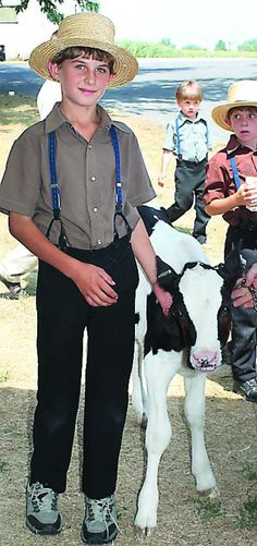 Amish boy with his Holstein Calf ~ Sarah's Country Kitchen ~