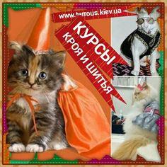 """Индивидуальный 🐱курс кроя и шитья✂ """"Одежда для животных""""🐶 для всех💃 желающих по скайпу или выезд по Киеву.🕒Продолжительность курса 8 часов."""