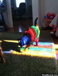 Rainbow Cat - http://breakbrunch.com/funny-picture-2249