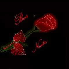 Flores e frases: BOA NOITE